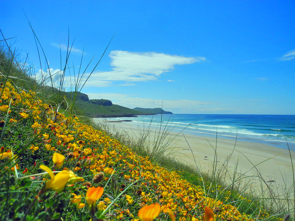 Picture of dunes and a beach with flowers on the dunes