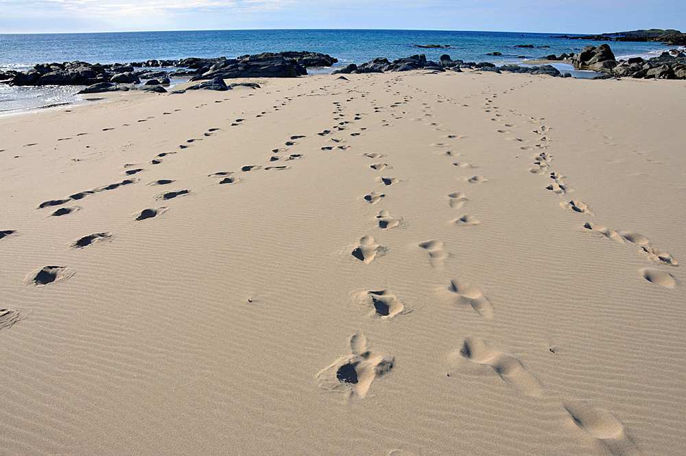 Picture of footsteps on a beach on a sunny day