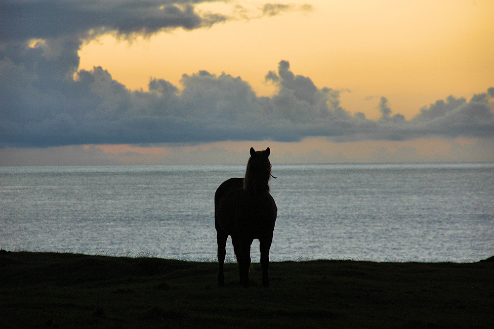 Picture of a horse on the top of a dune at sunset