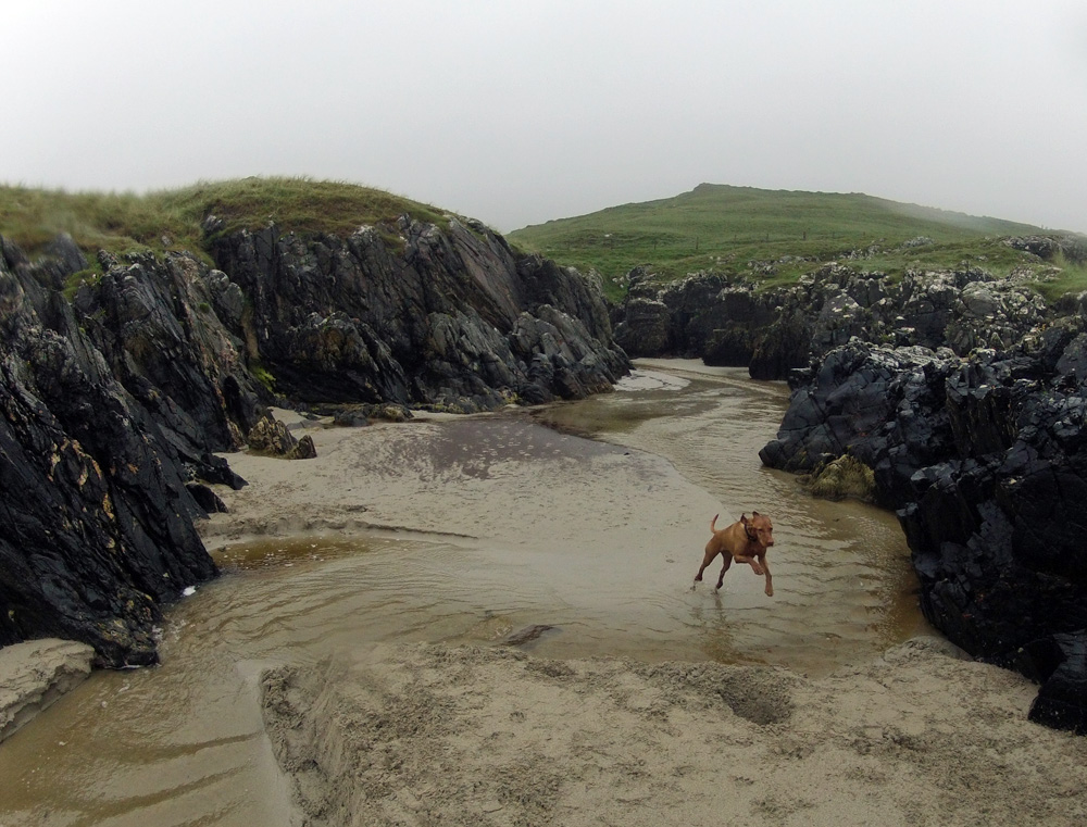 Picture of a dog jumping over a burn on a beach on a rainy day