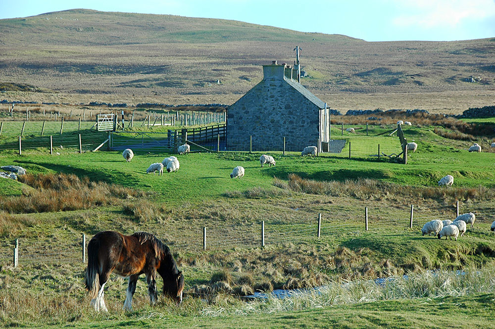 Picture of a horse grazing near a cottage
