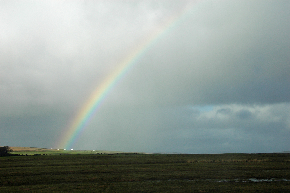 Picture of a rainbow over a wetland