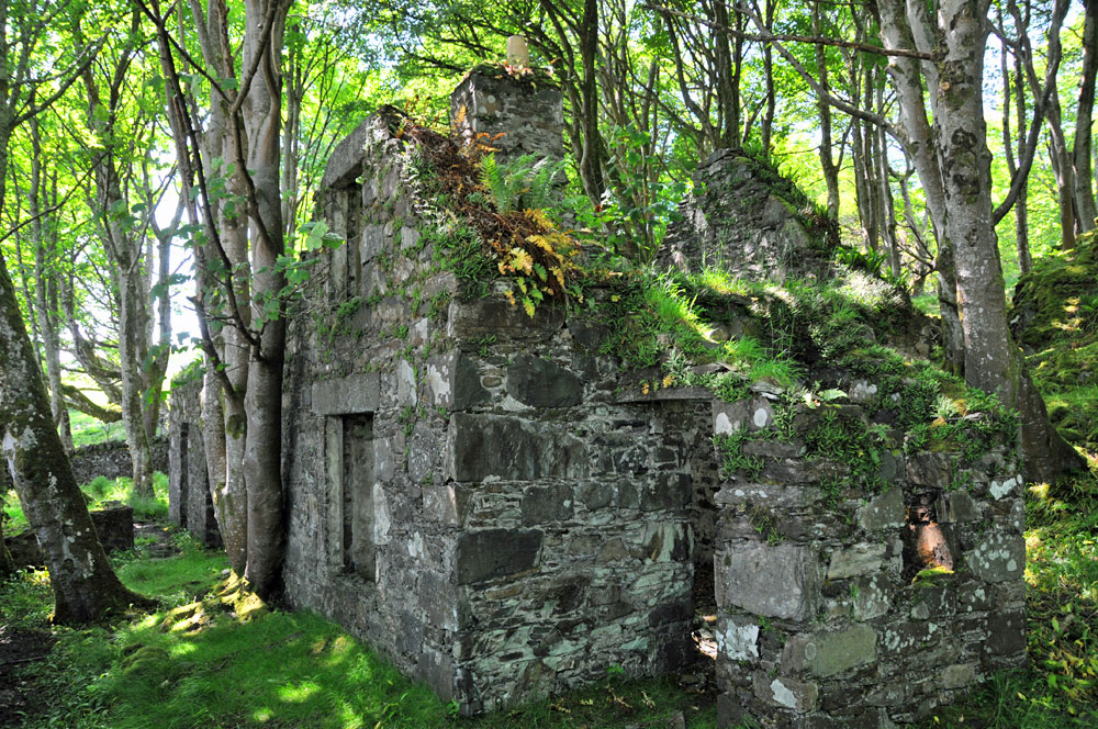 Picture of the ruin of a house in some old woods