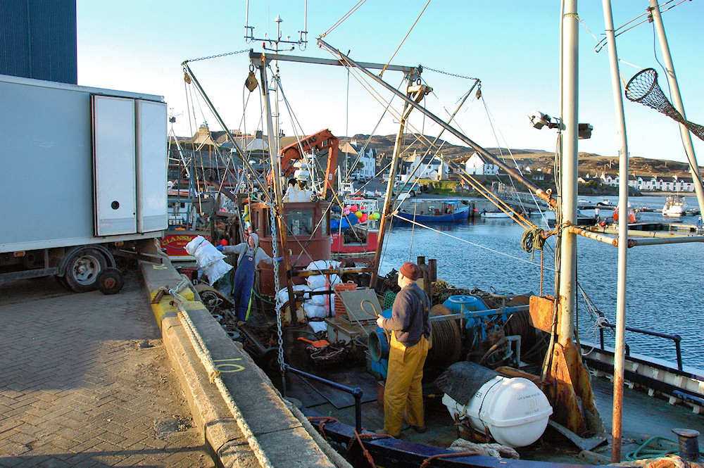 Picture of a fishing boat unloading its catch into a lorry in a small port