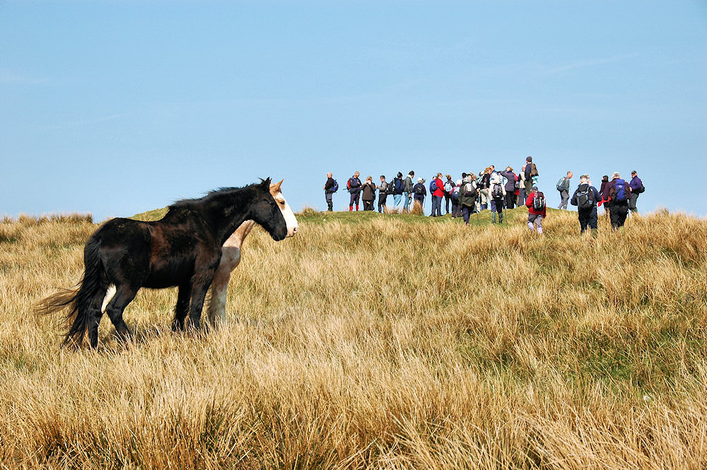 Picture of two horses and a group of walkers on a hill