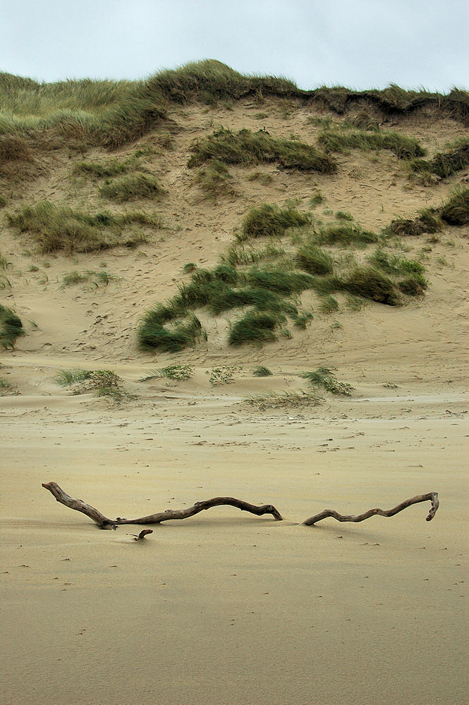 Picture of a branch part covered in sand below some dunes