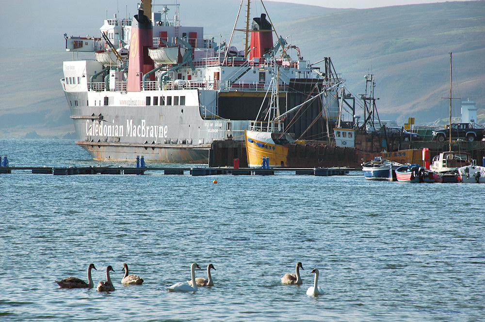 Picture of swans in a bay, a large ferry in the background
