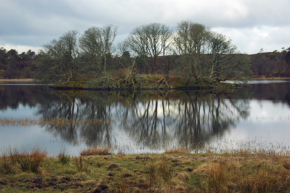 Picture of a small loch with an island with trees