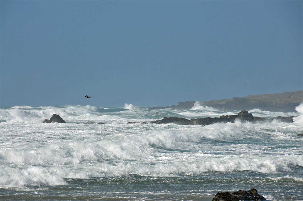 Picture of breaking waves with a bird flying across them in a wide bay