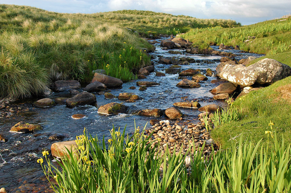 Picture of a small river in the evening light