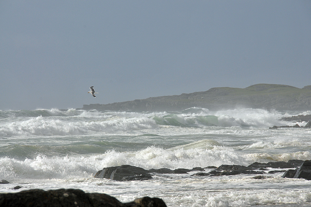 Picture of waves rolling into a bay, a bird flying past