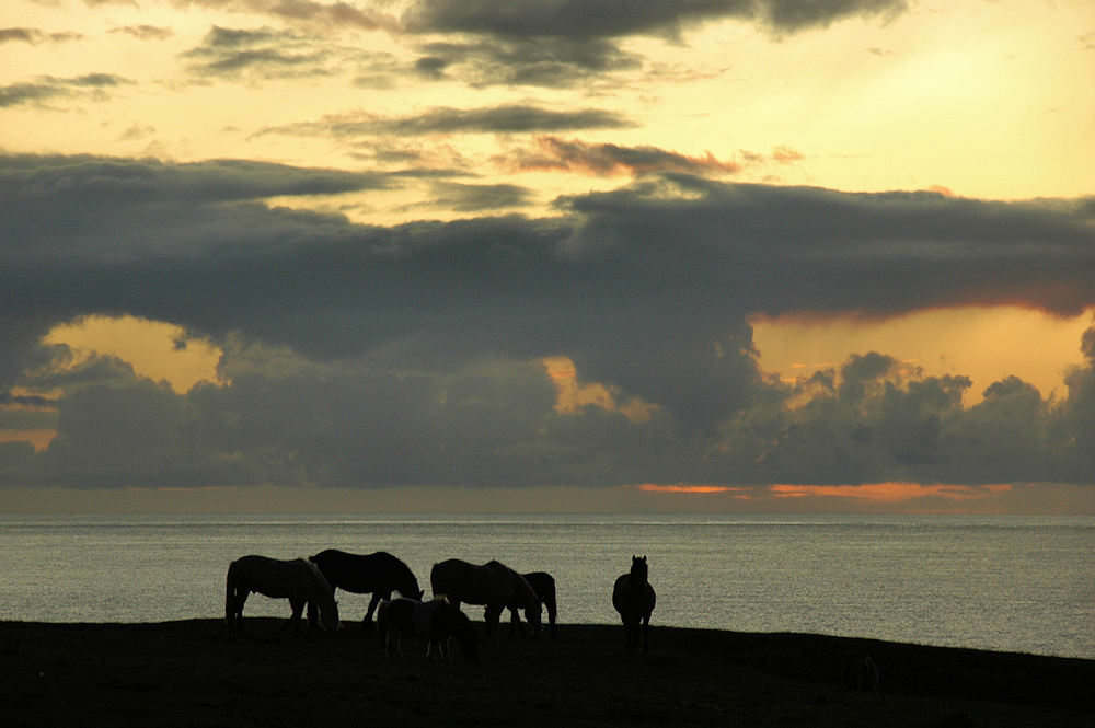 Picture of a group of horses standing high above the sea with a dramatic cloudy sunset in the background