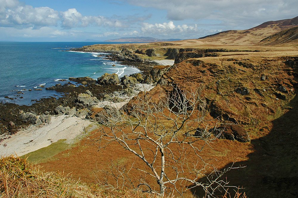 Picture of a small tree clinging to cliffs along raised beaches