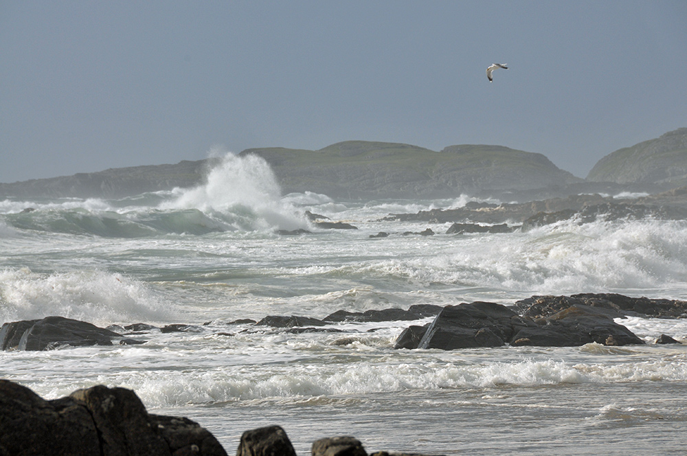 Picture of waves rolling into a bay and breaking over rocks, a gull flying overhead