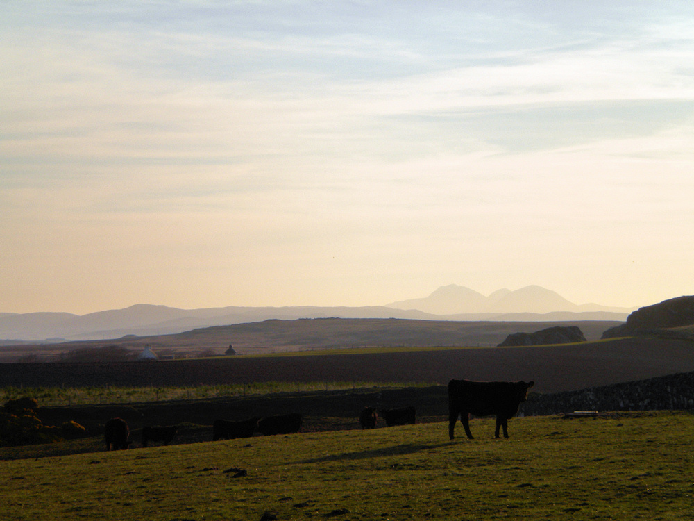 Picture of a hazy morning in a rural landscape, cattle grazing, mountains in the distance