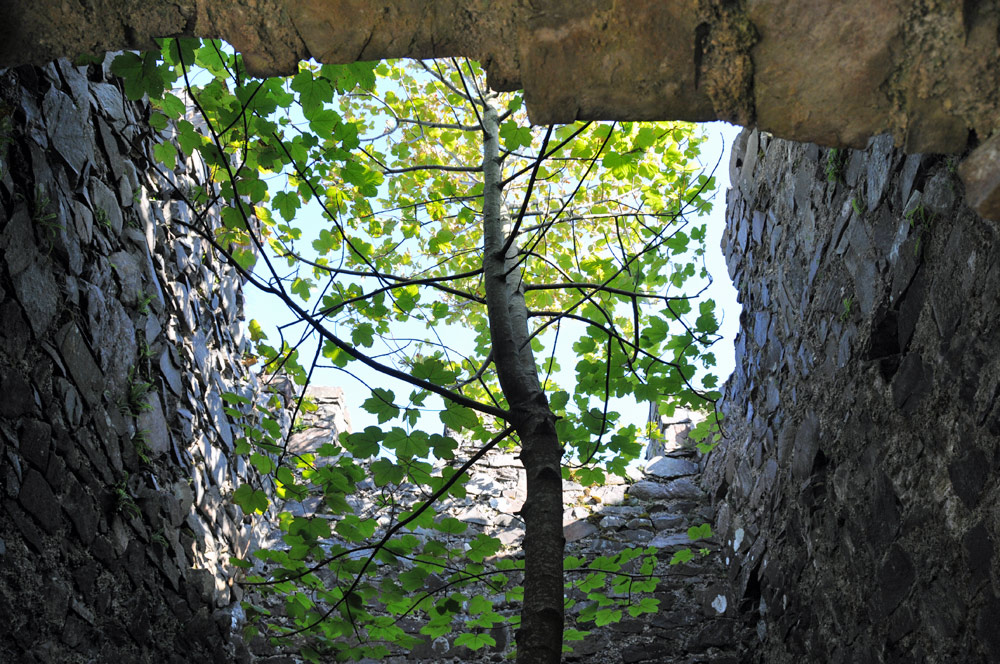 Picture of a tree growing inside an old tower