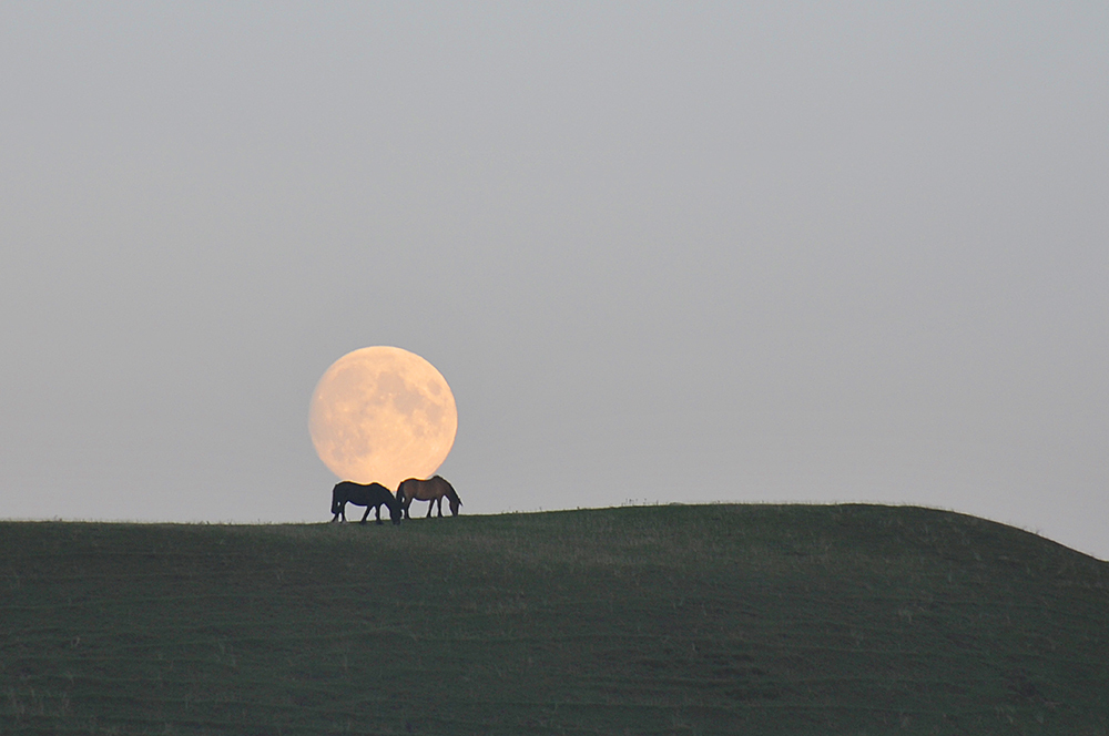 Picture of two horses grazing on top of a dune, the Moon rising in the background