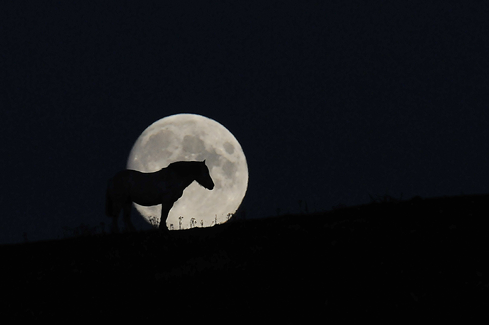 Picture of the silhouette of a horse in front of the rising Moon