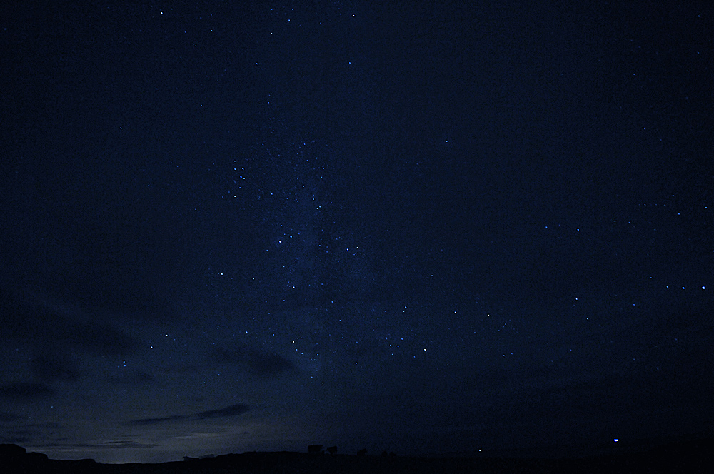 Picture of a night sky with many stars over a field with some cows