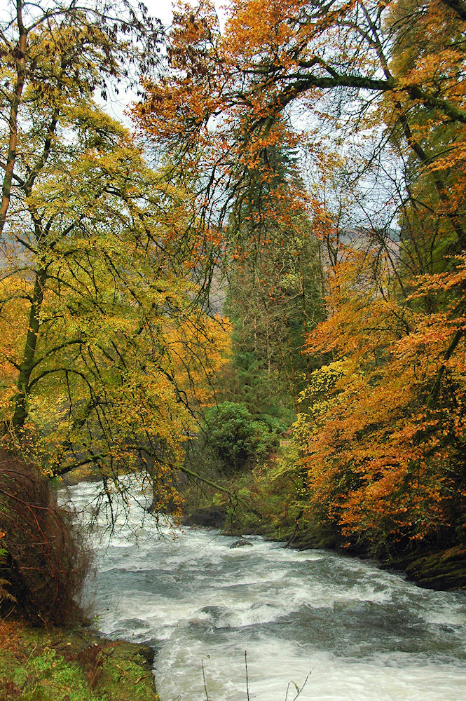 Picture of a burn rapidly flowing through trees in autumn colours