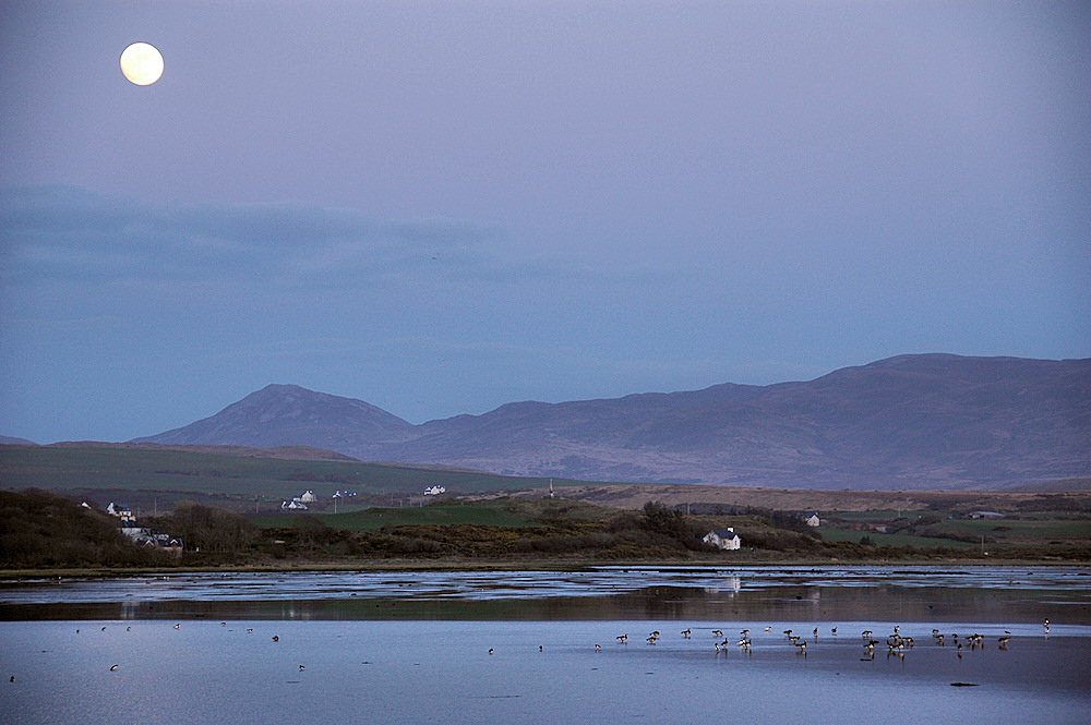 Picture of Barnacle Geese on the roost at mudflats under a full moon