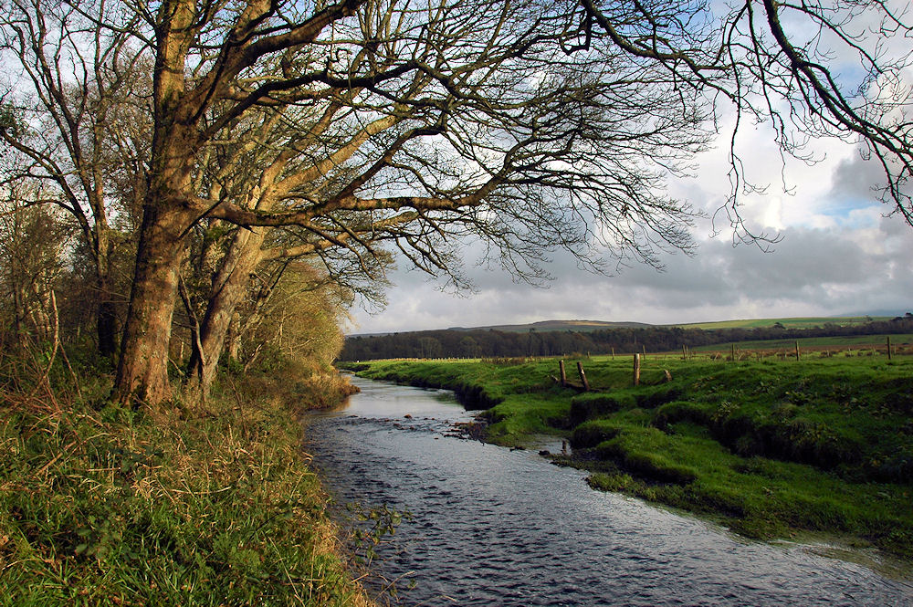 Picture of a small river with bare trees next to it