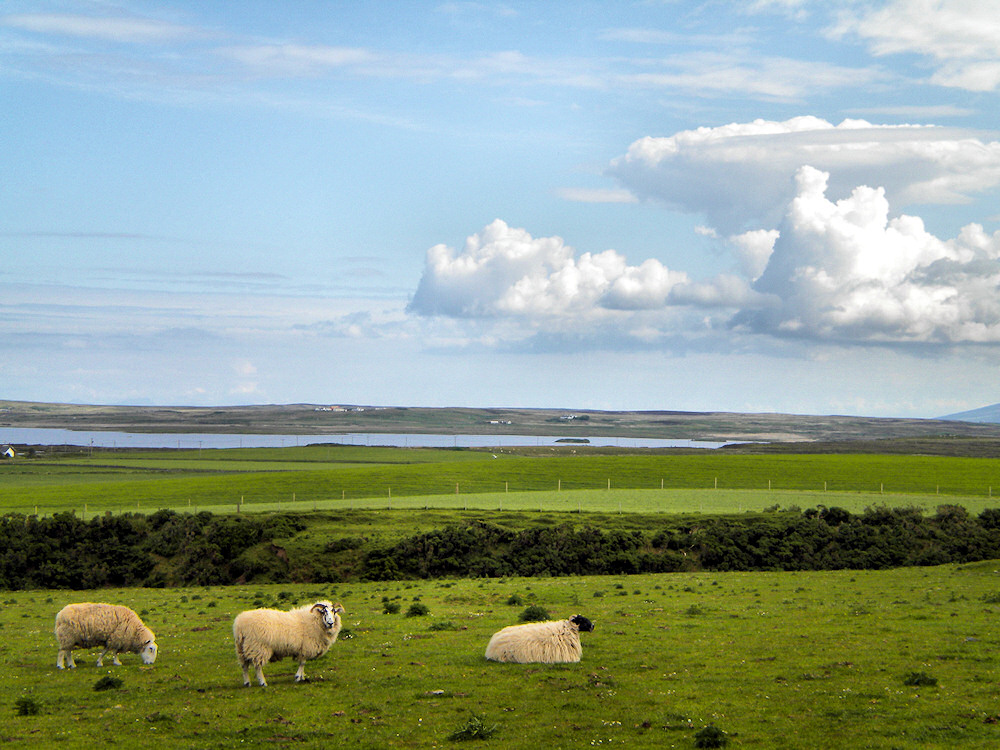 Picture of a few sheep in a field, a loch in the background, some clouds moving in