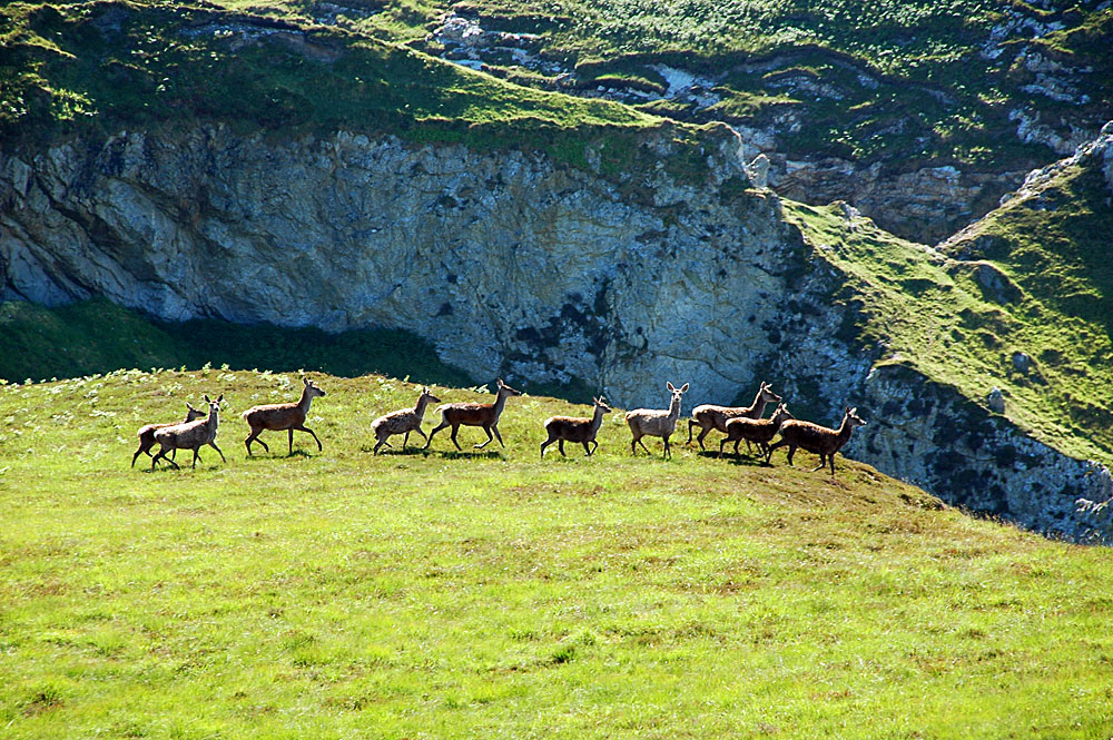 Picture of a small herd of deer, seen from a hill