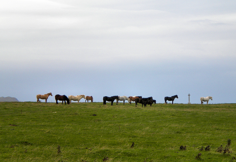 Picture of dozen horses in a field, all facing in the same direction