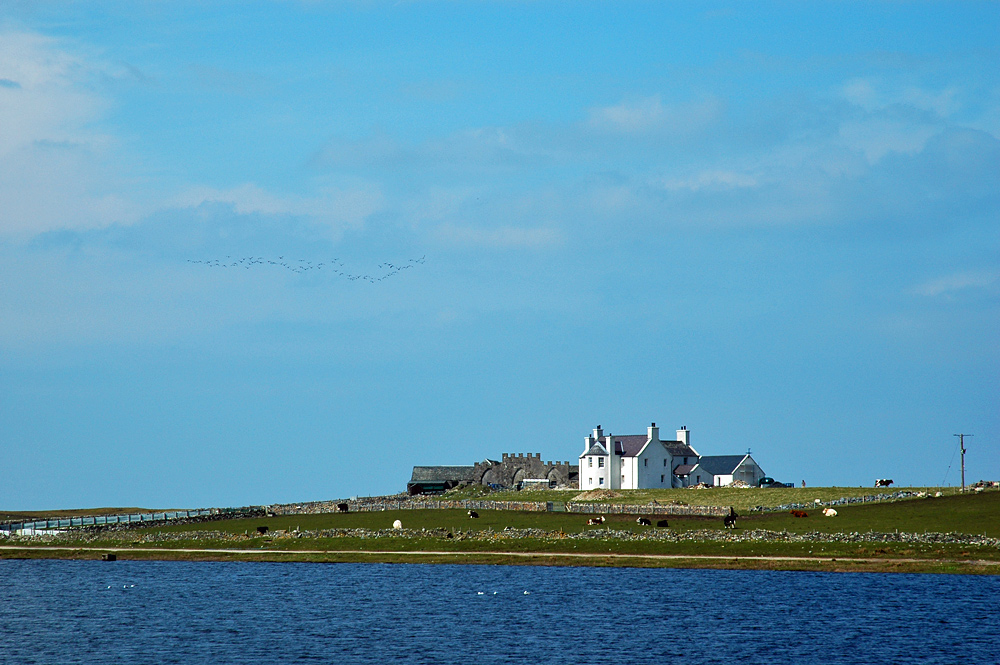 Picture of a farm steading seen across a loch, passing geese in the sky