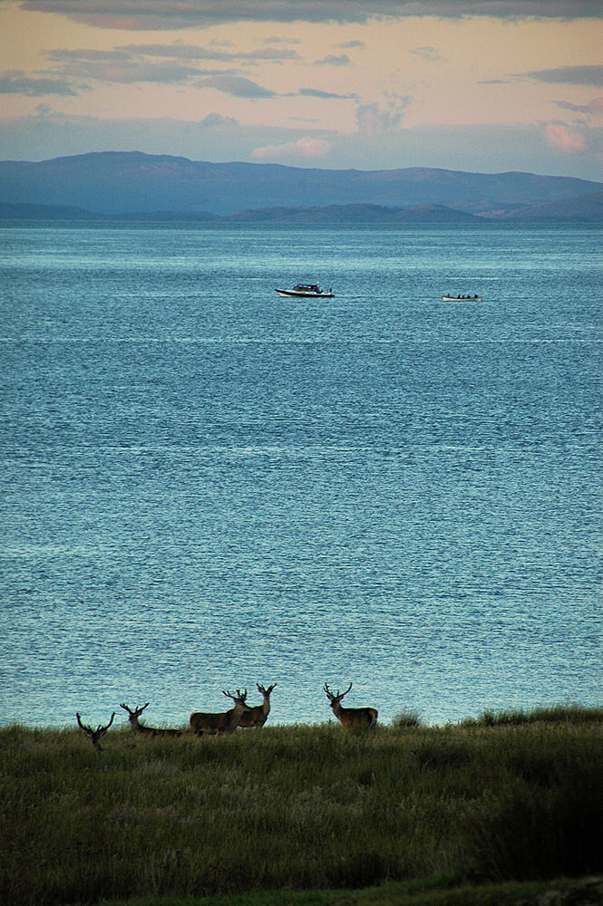 Picture of 5 Deer on a shore, two boats passing in the distance