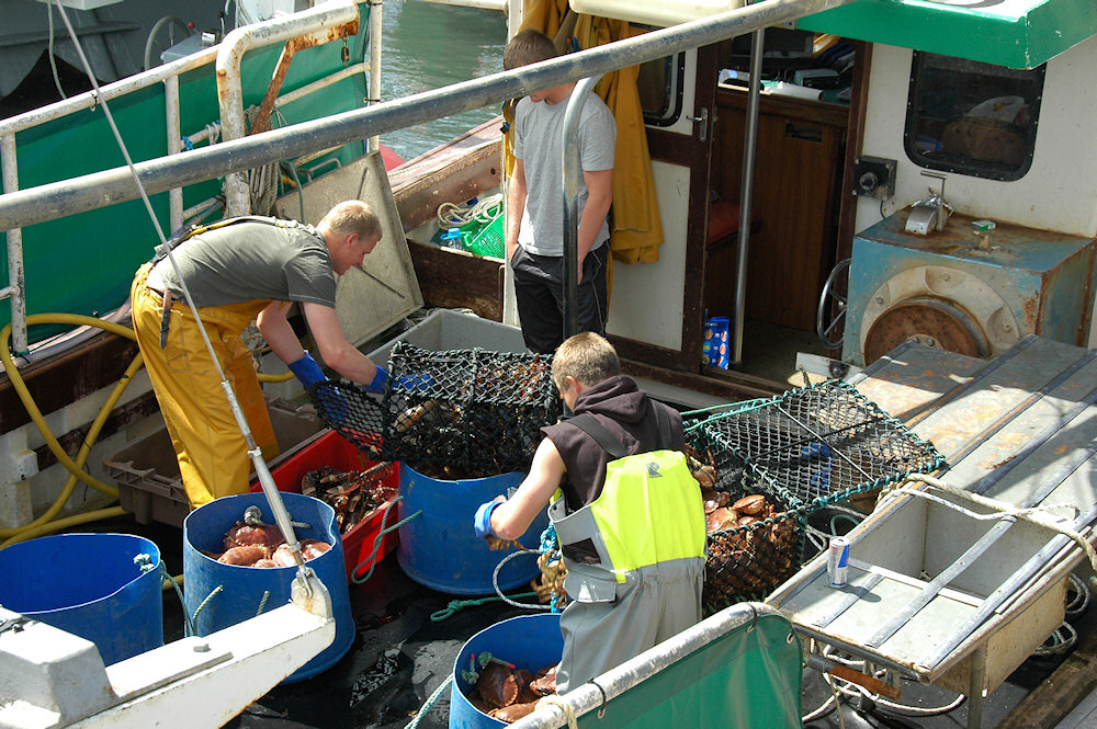 Picture of crab fishermen emptying their cages