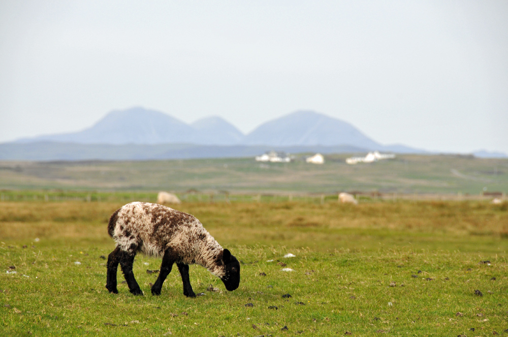 Picture of a grazing lamb, the silhouette of three mountains in the background
