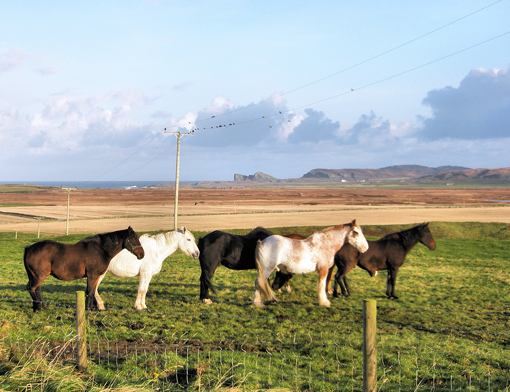 Picture of six horses on a field above a coastal landscape
