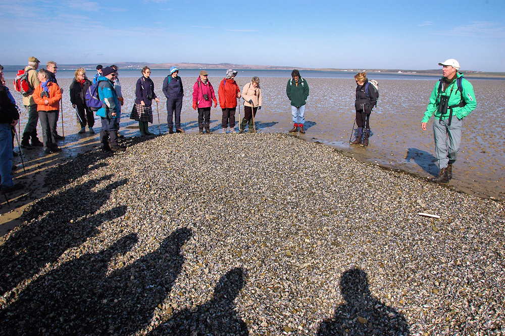 Picture of a group of walkers standing around a mussel bank during low tide