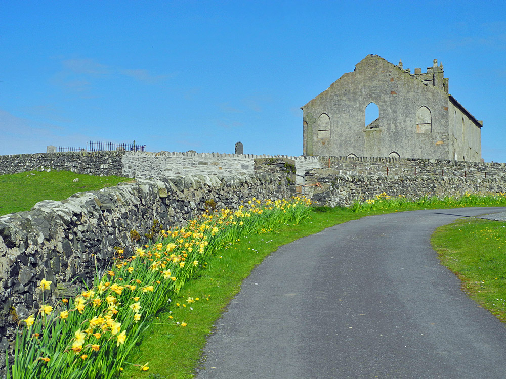 Picture of a lot of daffodils along a wall