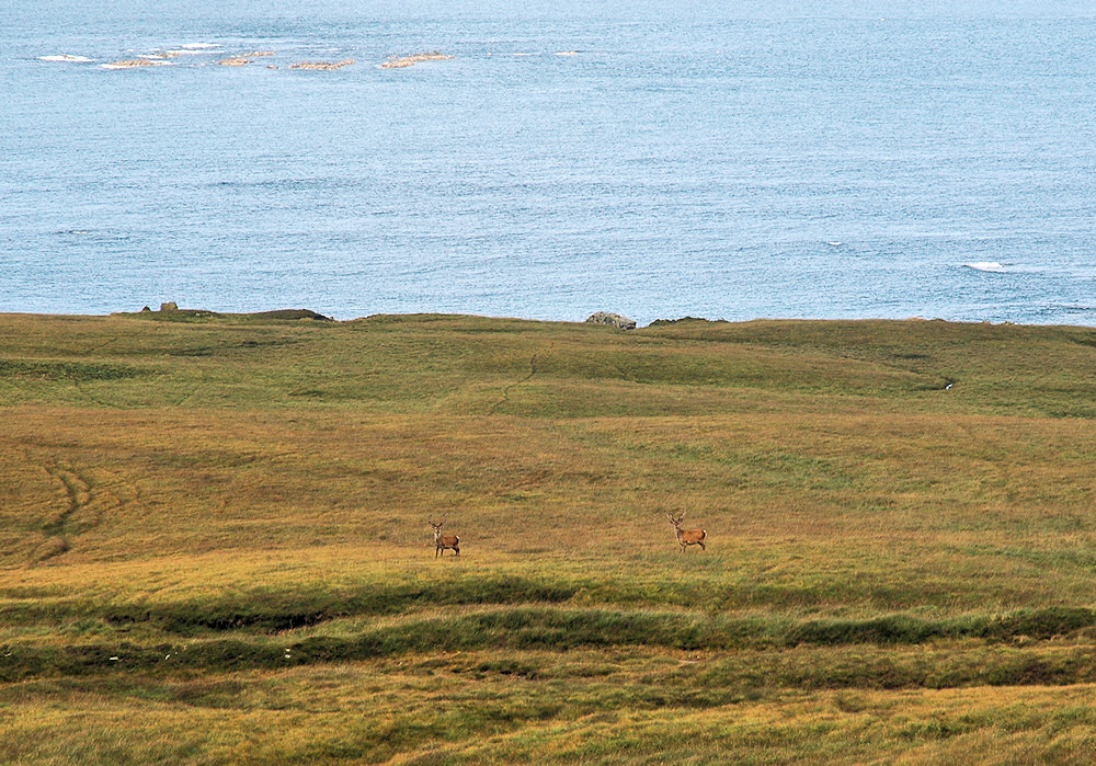 Two deer on a raised beach along a shore