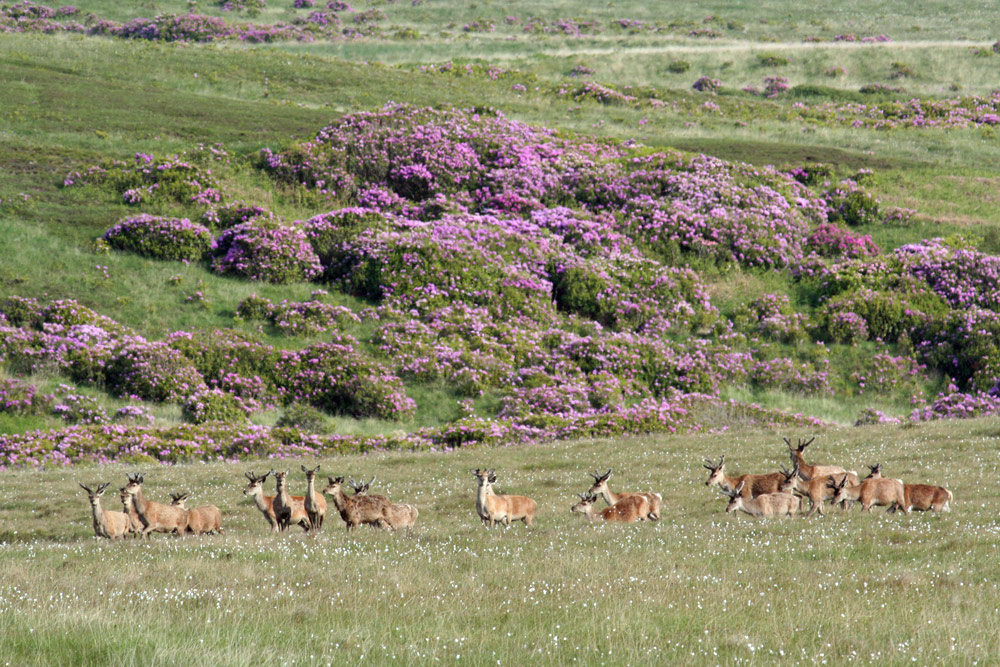 Picture of a herd of Deer at the bottom of low hills
