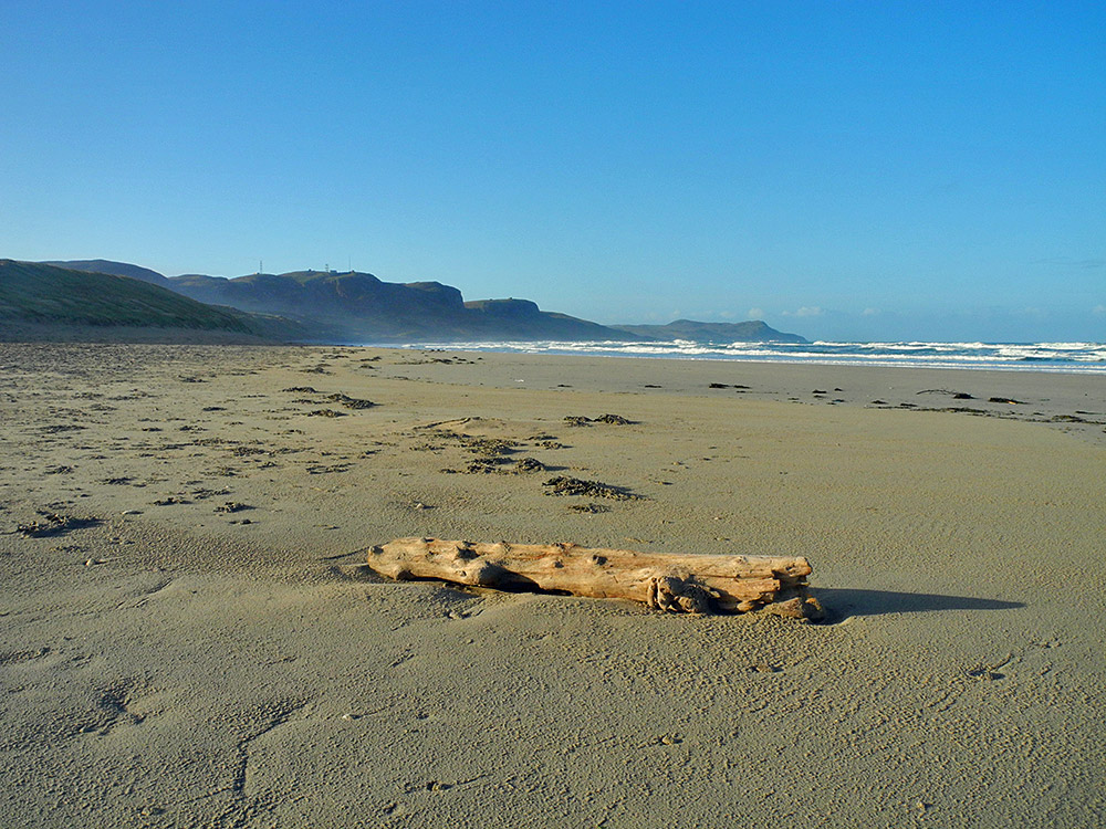 Picture of a beach on a sunny morning, a tree stump washed up on the beach