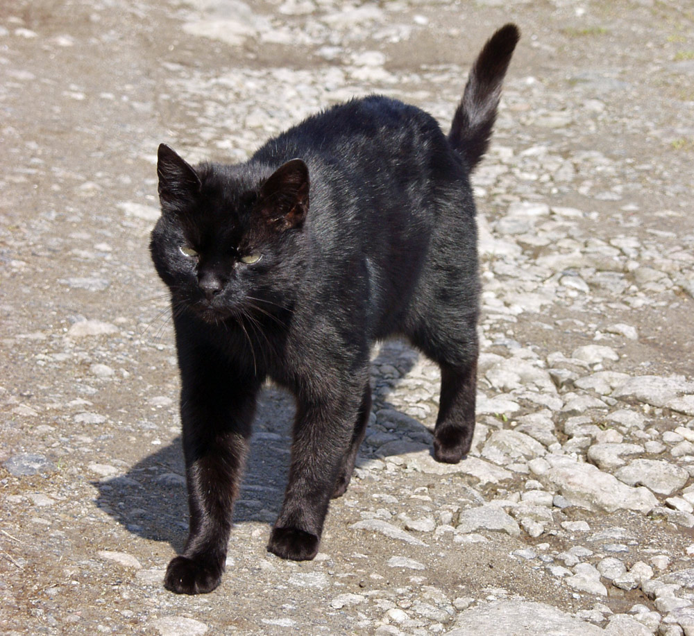 Picture of a black cat on a track