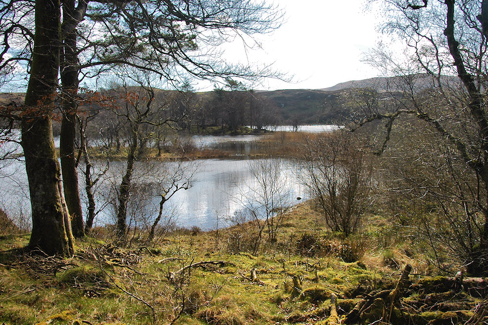 Picture of a loch seen through trees
