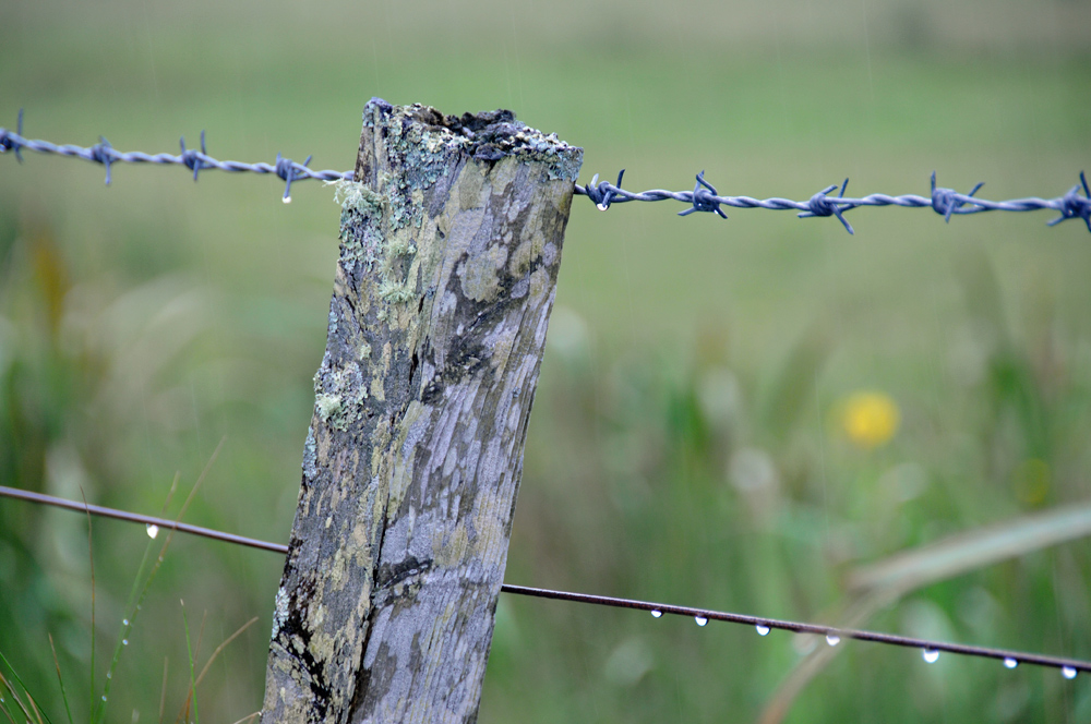 Picture of a fence in the rain