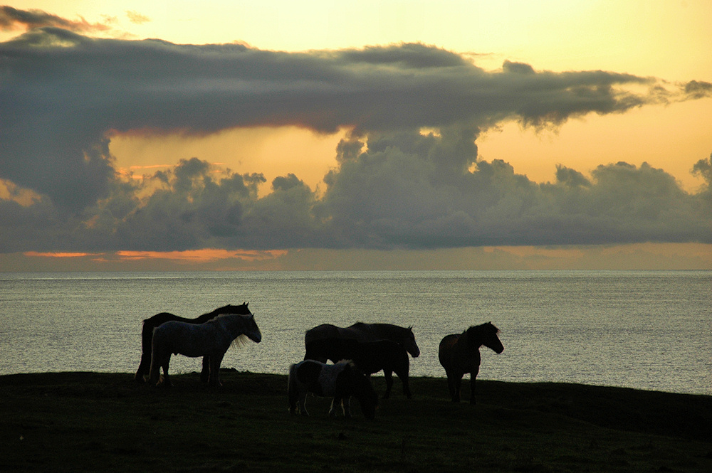 Picture of a few horses and a pony at sunset