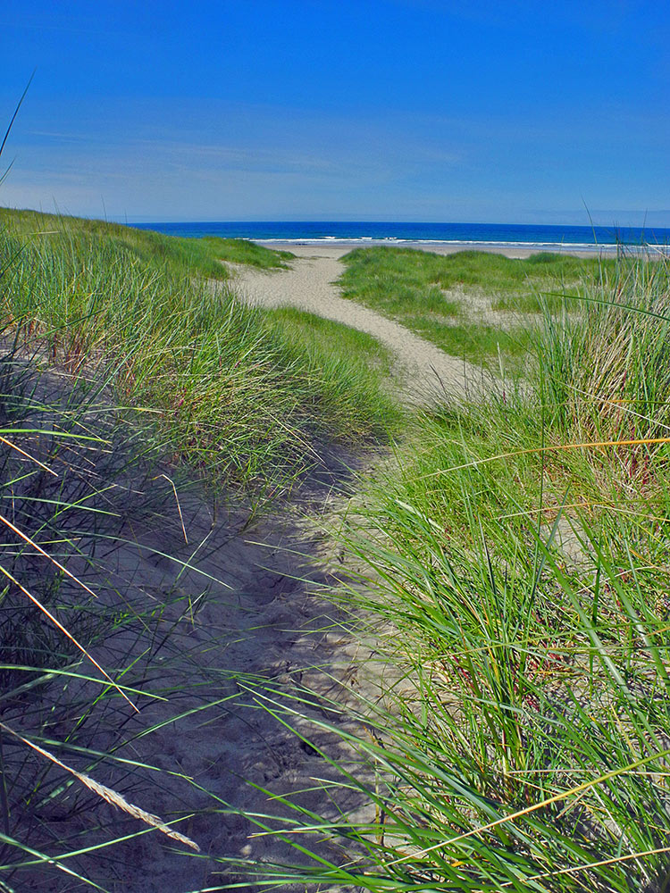 Picture of a path through dunes leading to a beach