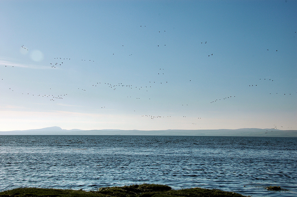 Picture of a view over a sea loch in the sun with various groups of Barnacle Geese flying past