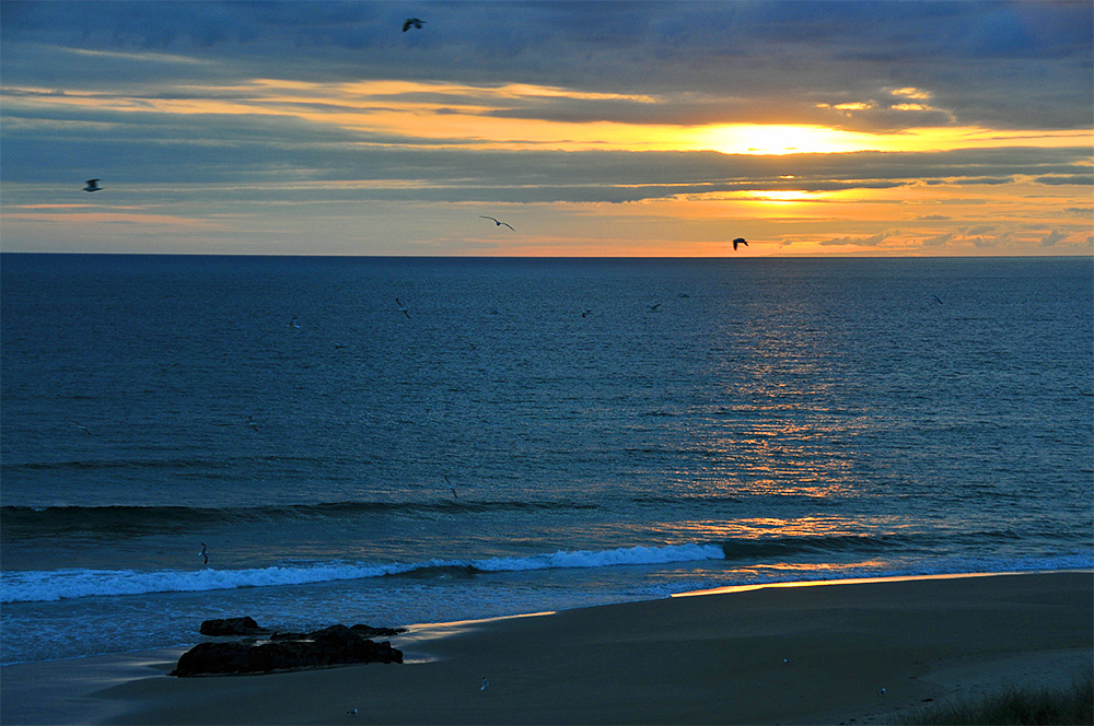 Picture of a cloudy sunset, a number of gulls swirling around in the air