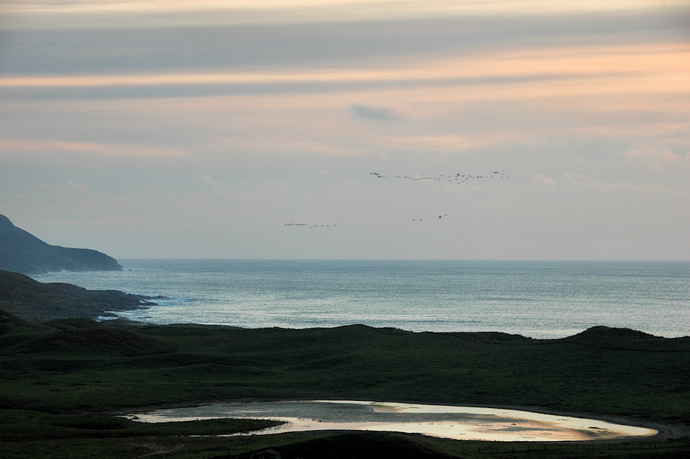 Picture of two groups of Barnacle Geese flying over a bay in the evening light