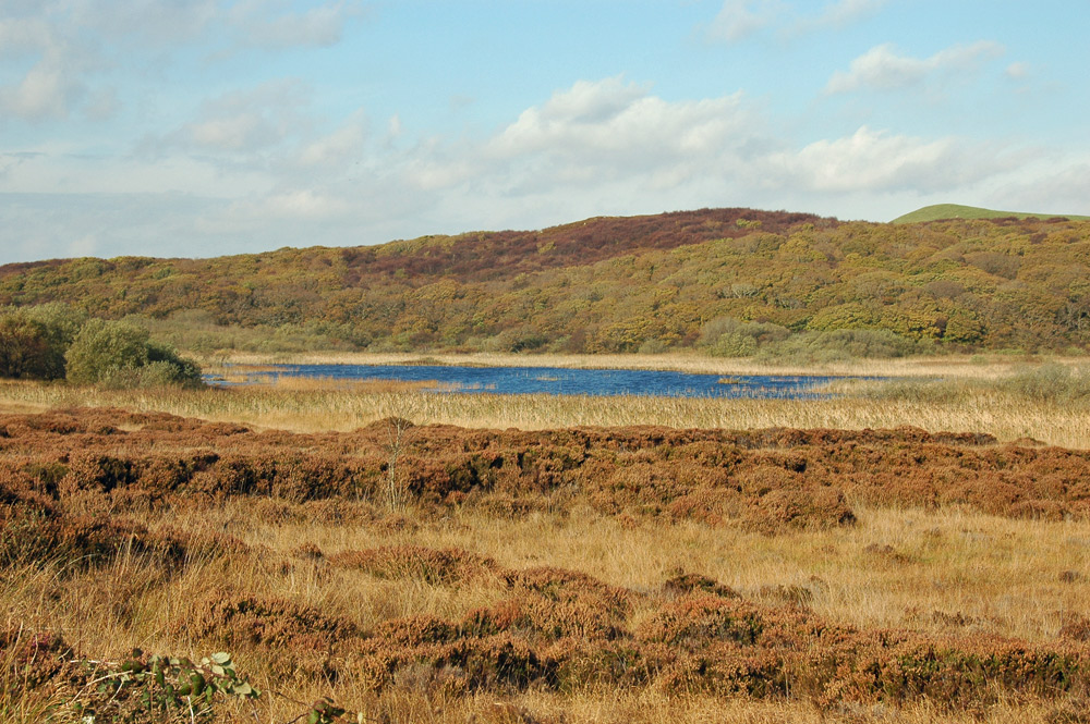 Picture of a small loch in a heather landscape