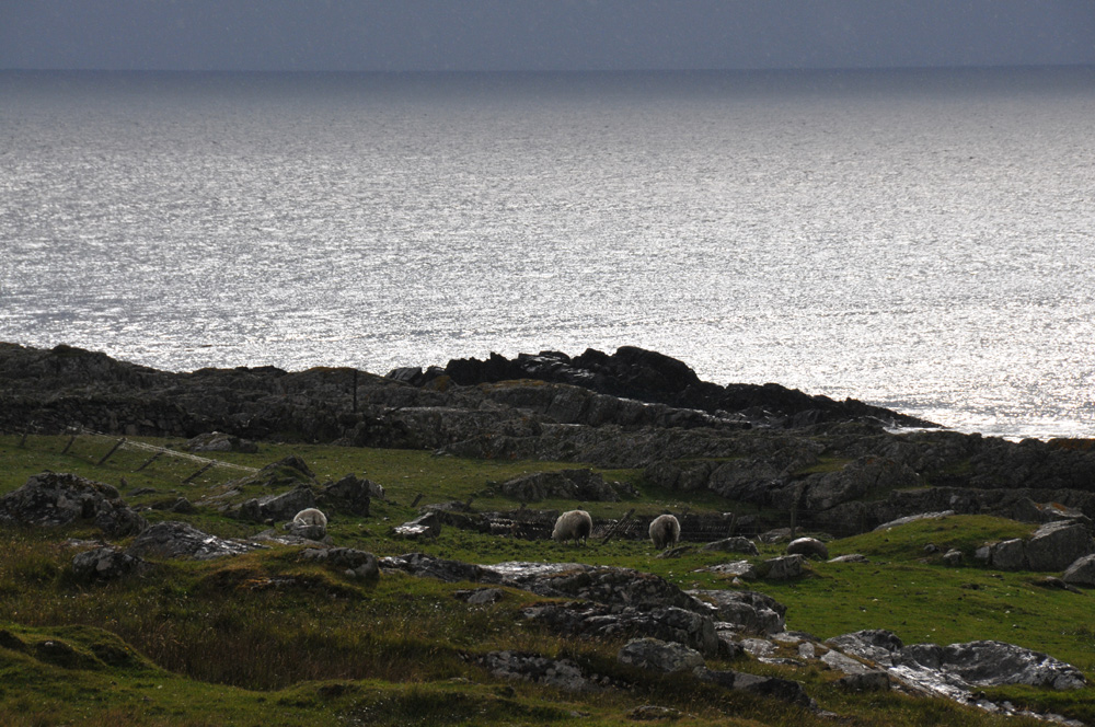 Picture of a rugged coastal landscape with grazing sheep under a dark sky