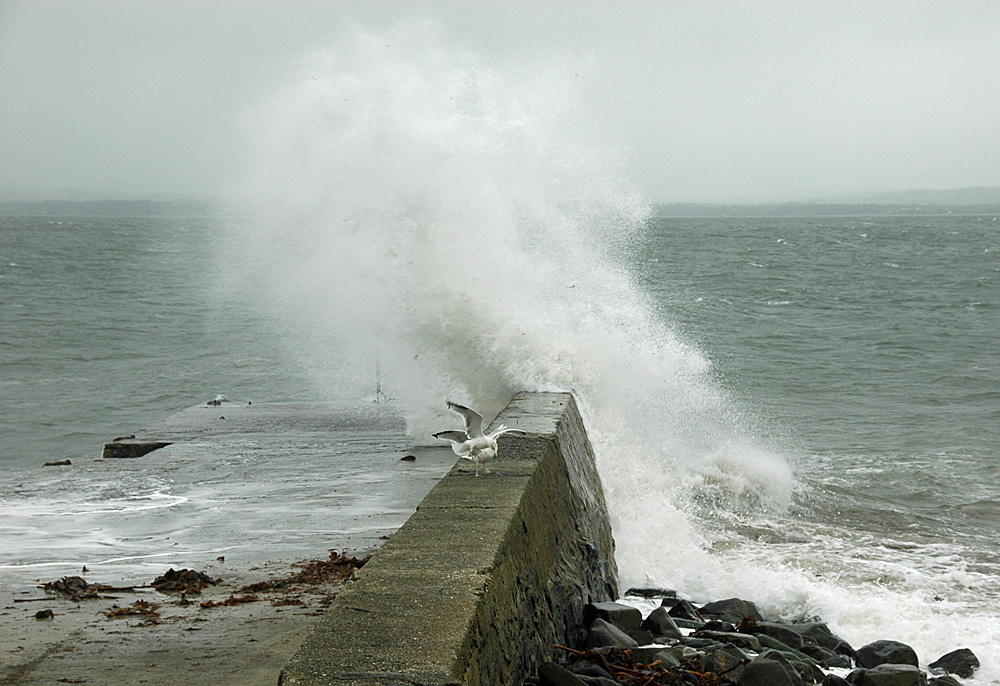 Picture of a wave breaking over a small pier, gulls still sitting on the pier wall